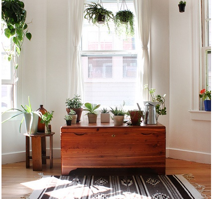How to Introduce Hanging Plants to your Décor