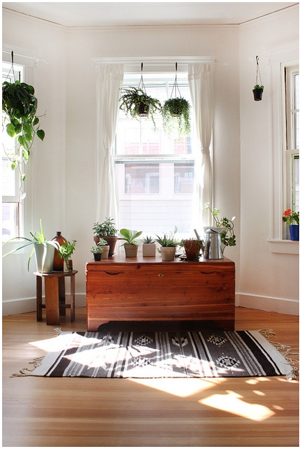 Home remodeling blogs how to introduce hanging plants to your d cor - Best room plants ...