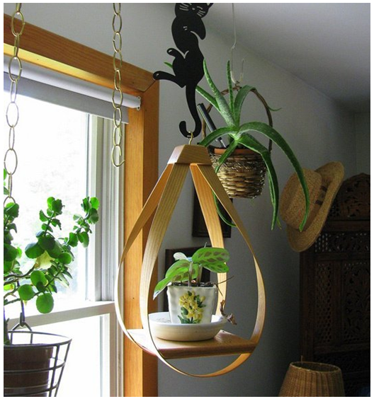 Hanging Plants for Indoors